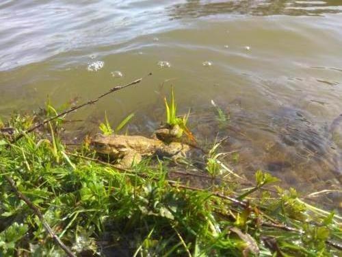 zivot ve vode a u vody 002